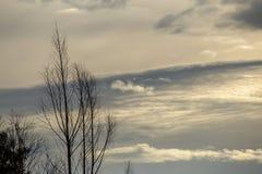 在一棵不生叶的树后的微妙的云彩 库存照片