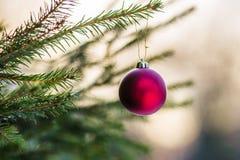 在一棵云杉的树的红色装饰品球 免版税库存图片