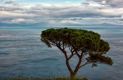 在一棵偏僻的树后的海岸远景在与绒毛的蓝天下 库存照片