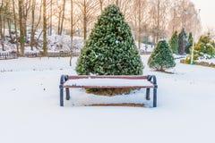 在一棵充满活力的常青树前面的木公园长椅 图库摄影