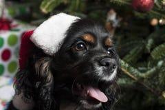 在一棵圣诞树前面的一只逗人喜爱的猎犬与圣诞老人 库存图片