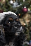 在一棵圣诞树前面的一只逗人喜爱的猎犬与圣诞老人 免版税库存图片