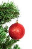 在一棵圣诞树的分支的红色球在白色背景的 免版税库存照片