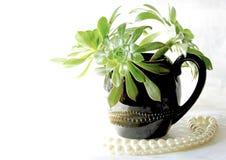 在一棵多汁植物附近的一条珍珠项链在一个陶瓷花瓶 图库摄影