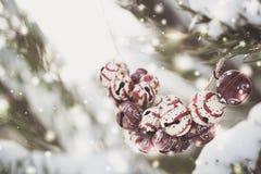 在一棵多雪的树的分支的圣诞节五颜六色的葡萄酒响铃 库存照片