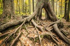 在一棵大树前面的五颜六色的秋天公园根源 库存图片
