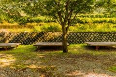 在一棵大树后的三张大野餐桌 库存图片