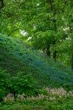 在一棵大树的背景的开花的山腰 库存照片