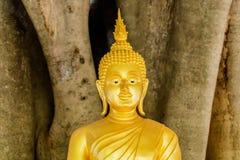 在一棵大树的菩萨雕象 库存图片