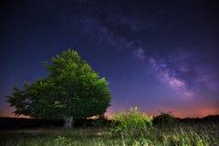 在一棵大树的银河 库存图片