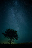 在一棵孤立树上的银河 图库摄影