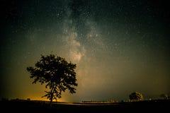在一棵孤立树上的银河 免版税库存照片