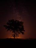 在一棵孤立树上的银河 免版税图库摄影