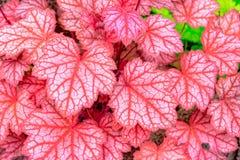 在一棵小的树的许多红色叶子 库存图片