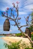 在一棵开花的树的灯笼在海滩,努沙Lembongan,印度尼西亚附近 库存照片