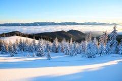 在一棵有雾的早晨和积雪的绿色圣诞树的山 奇妙冬天背景 holliday美好的圣诞节 库存照片