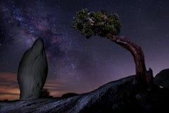 在一棵杜松树的银河在约书亚树国家公园美国 免版税图库摄影