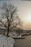 在一棵树下的小船在日落的冬天湖 图库摄影