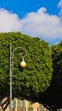 在一棵树前面的灯笼在街市卡利亚里的街道,撒丁岛 库存图片