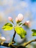 在一棵树成长在葡萄牙 免版税库存照片