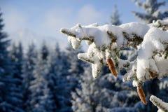 在一棵树的一个锥体在冬天 免版税库存图片