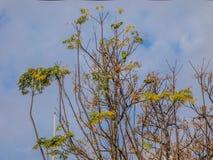 在一棵树的分支的鹦鹉有蓝天背景 免版税库存图片