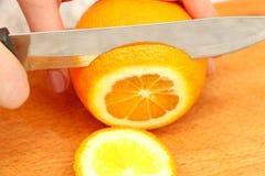在一棵树的切的桔子在微粒 免版税库存照片