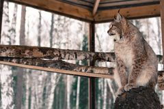 在一棵树的天猫座就座在笼子 库存照片