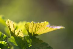 在一棵树的小叶子在春天 宏指令 免版税库存照片