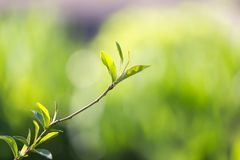 在一棵树的小叶子在春天 宏指令 库存图片