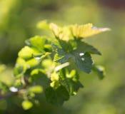在一棵树的小叶子在春天 宏指令 图库摄影
