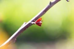 在一棵树的小叶子在春天 宏指令 库存照片