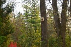 在一棵树的手工制造鸟舍在森林公园,鸟的手木避难所能度过冬天 免版税库存图片