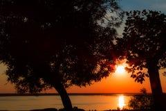 在一棵树的日落在湖 库存照片