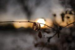 在一棵树的早午餐的婚戒在日落背景的 免版税库存照片