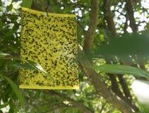 在一棵树的昆虫陷井在塞浦路斯的公园 库存照片