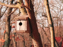 在一棵树的木鸟舍在森林里 免版税库存图片