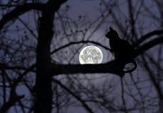 在一棵树的猫剪影与满月发光 库存照片