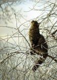 在一棵树的猫在冬天 库存照片