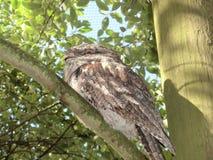 在一棵树的猫头鹰在动物园里 免版税库存照片