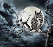 在一棵树的猫头鹰在晚上 图库摄影