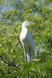 在一棵树的白色鸟在水附近 免版税库存照片