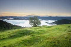 在一棵树的看法在日出的山小山 山草甸wi 库存照片