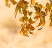 在一棵树的秋叶本质上 免版税库存图片