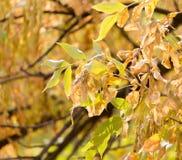 在一棵树的秋叶本质上 库存照片