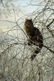 在一棵树的美丽的猫在冬天 免版税库存照片