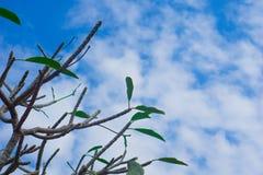 在一棵树的蓝天在晴天 免版税库存照片
