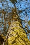 在一棵树的蘑菇在河gauchach峡谷在黑森林里在德国 免版税库存照片