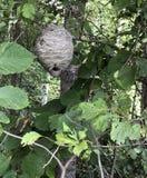 在一棵树的蜂蜂房在原野 免版税图库摄影
