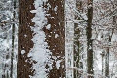 在一棵树的雪在森林里 库存照片
